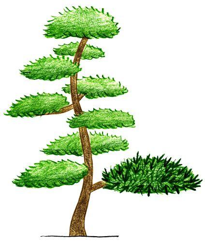 松の剪定 剪定時期 適期 | 庭木...