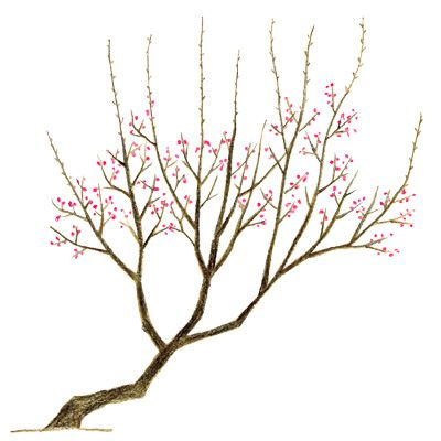の 剪定 梅 木